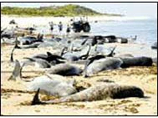 Balinalar peş peşe intihar etti